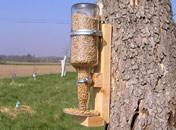 Jak zrobić karmnik dla ptaków z butelki