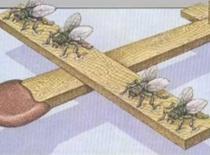 Jak zbudować samolot na muchy
