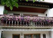 Jak sadzić krzewy na balkonie