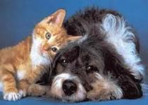 Jak opiekować się psem i kotem