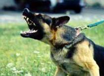 Jak postępować z agresywnym psem