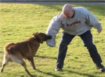 Jak postępować z agresywnym psem #2