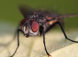 Jak pozbyć się gryzoni i owadów przy pomocy ultradźwięków