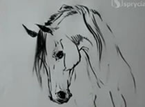 Jak narysować głowę konia