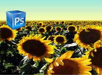 Jak stworzyć prosty baner w Photoshop CS3