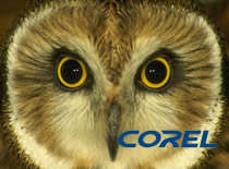 Jak zrobić sowę w CorelDRAW