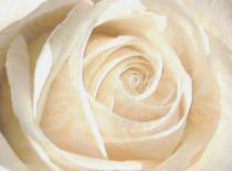 Jak zrobić różę z serwetki