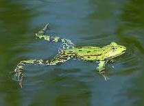 Jak nauczyć się pływać żabką #2 - Technika pływania