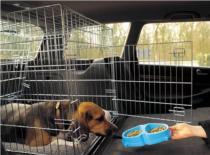 Jak przewozić zwierzęta w samochodzie
