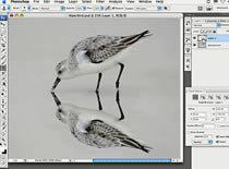 Jak zrobić odbicie przedmiotu w Photoshopie