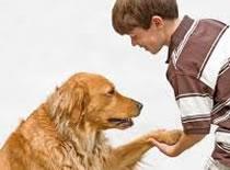 Jak szkolić psy za pomocą elektronicznej obroży #1