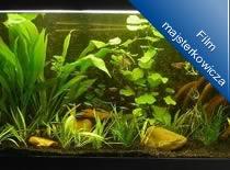 Jak zbudować profesjonalne akwarium