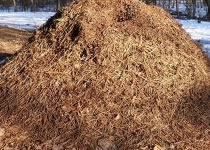 Jak pozbyć się mrowiska z ogródka