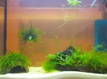 Jak zrobić energooszczędne oświetlenie akwarium