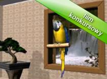 Jak rozmawiać z wirtualną papugą
