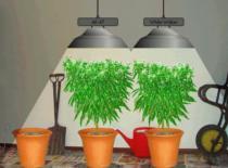 Jak uprawiać wirtualną trawkę