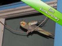Jak zrobić huśtawkę dla ptaszka