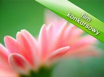 Jak zmienić kolor płatków kwiatka