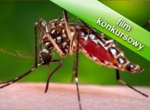 Jak poradzić sobie z komarami