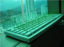 Jak posiać komuś trawę na klawiaturze