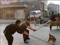 Jak zapobiec zabijaniu psów w Korei Południowej