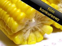Jak zrobić młynek do kukurydzy na zanęty wędkarskie
