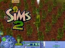 Jak zostać simoroślą w The Sims 2 Cztery Pory Roku