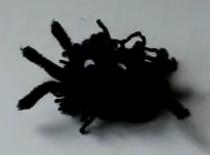 Jak zrobić pająka z wełny