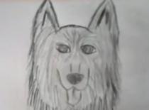 Jak narysować psa z postawionymi uszamy