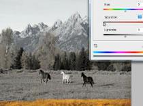 Jak zrobić czarno białe zdjęcie 5 sposobów