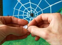 Jak zrobić skaczącego pająka