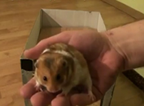 Jak zrobić klatkę dla chomika z kartonu