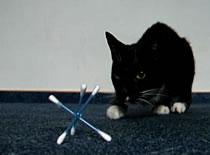 Jak wykonać zabawkę dla kota