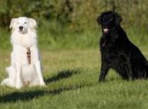 Jak unikać problemów behawioralnych u psów #1