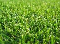 Jak przygotować ogród do założenia trawnika #2