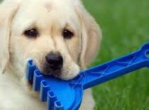 Jak nauczyć psa czystości