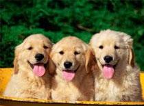 Jak wybrać rasę psa i P&O ogólnie o psach