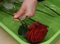 Jak ożywić więdnące kwiaty