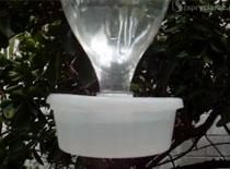 Jak zrobić karmnik dla ptaków z plastikowych butelek