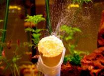 Jak zrobić bimbrownię CO2 do akwarium