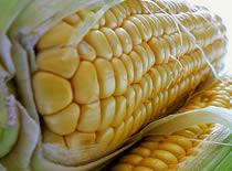 Jak poprawić smak gotowanej kukurydzy