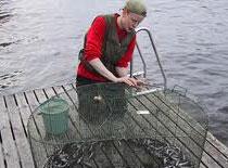 Jak łowić ryby za pomocą pręta żebrowanego