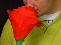 Jak zrobić ogromną różę