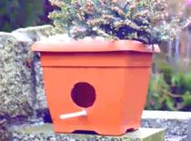 Jak zrobić karmnik doniczkowy dla ptaków