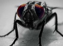 Jak zrobić nietoksyczną pułapkę na muchy