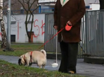 Jak rozwiązać problem zbierania kup po psach