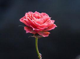Jak wykonać trik z magicznym kwiatkiem
