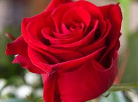 Jak wykonać iluzję Magiczny Kwiatek