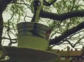 Jak zrobić karmnik dla ptaków z filiżanki