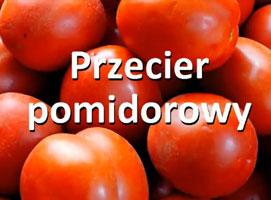 Jak zrobić przecier pomidorowy